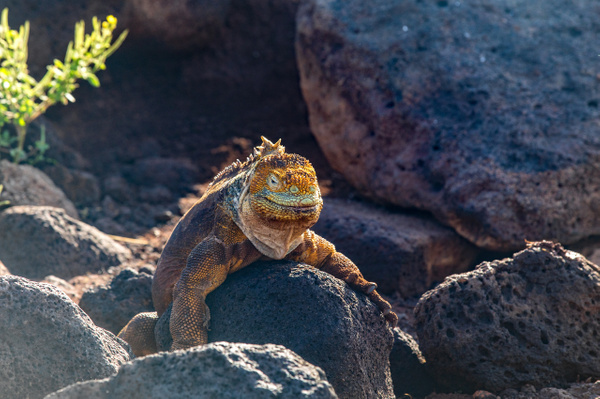 3 - North Seymour  (1) - GALAPAGOS - May 2017 - François Scheffen Photography
