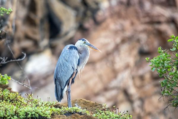 6 - Santa Cruz - Eden Islet  (8) - GALAPAGOS - May 2017 - François Scheffen Photography