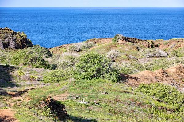 8 - San Cristobal - Punta Pitt (4) - GALAPAGOS - May 2017 - François Scheffen Photography