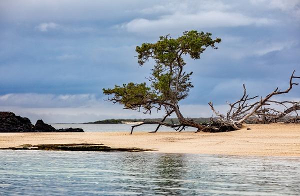 6 - Santa Cruz - Eden Islet  (12) - GALAPAGOS - May 2017 - François Scheffen Photography
