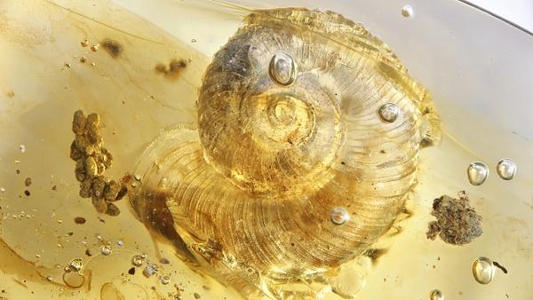 BU235 snail - Miscellaneous - François Scheffen Photography