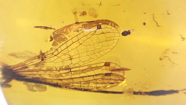 BU373b odonata - Odonata - François Scheffen Photography