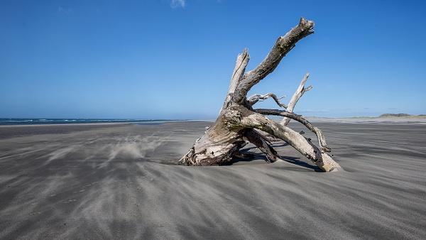 Farewell Spit (3) - NEW ZEALAND - February 2014 - François Scheffen Photography