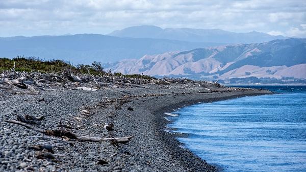 Kapiti Island - NEW ZEALAND - February 2014 - François Scheffen Photography