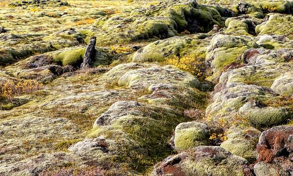 BL2P0889x Medalland lava field - ICELAND - October 2012 - François Scheffen Photography