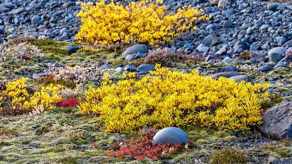 BL2P1434x Svínafellsjökull, Nationalpark Skaftafell - ICELAND - October 2012 - François Scheffen Photography