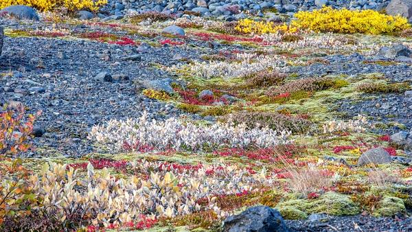 BL2P1483x Svínafellsjökull, Nationalpark Skaftafell - ICELAND - October 2012 - François Scheffen Photography