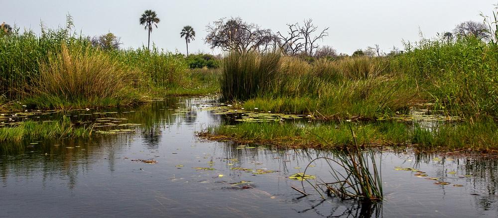 Botswana pano (1)