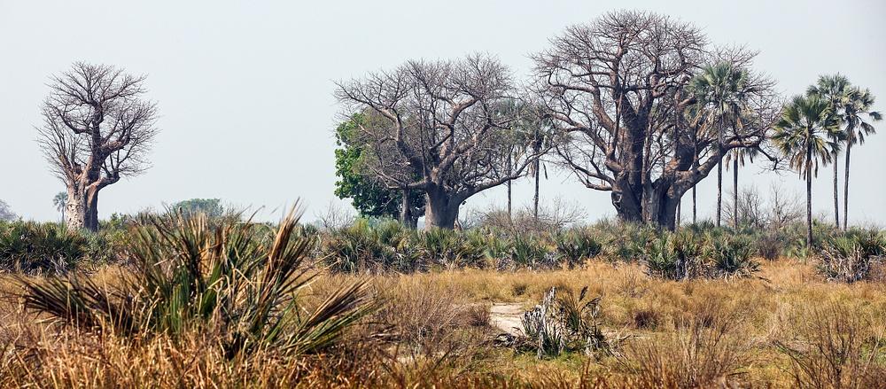 Botswana pano (8)