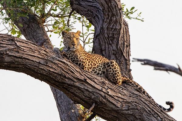 2. Zarafa Camp (12) - BOTSWANA - François Scheffen Photography