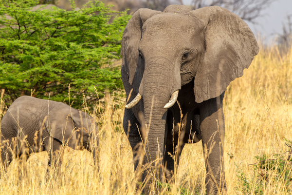 2. Zarafa Camp (19) - BOTSWANA - François Scheffen Photography