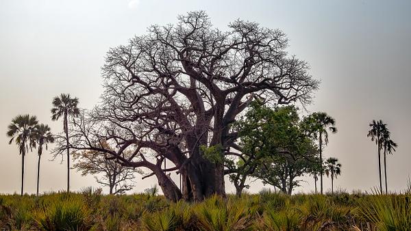 3 Jao Camp (4) - BOTSWANA - François Scheffen Photography