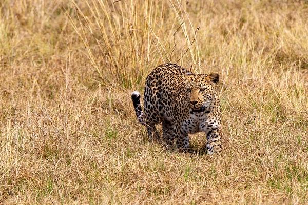 3 Jao Camp (7) - BOTSWANA - François Scheffen Photography
