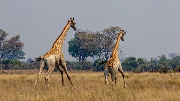 3 Jao Camp (9) - BOTSWANA - François Scheffen Photography