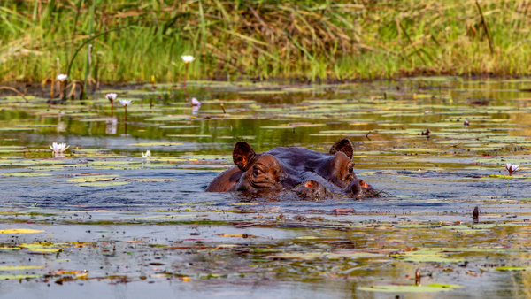 3 Jao Camp (14) - BOTSWANA - François Scheffen Photography