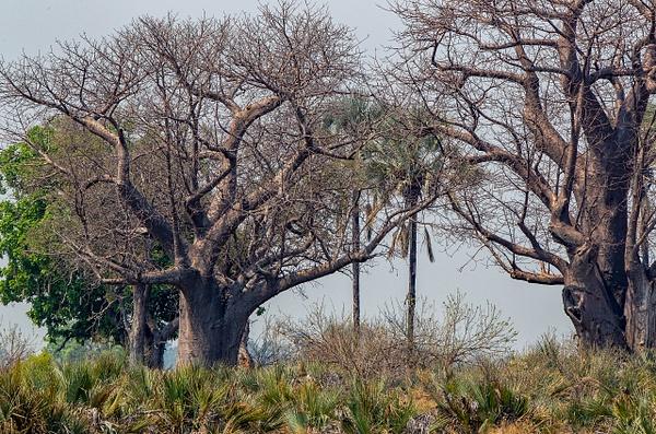 3 Jao Camp (11) - BOTSWANA - François Scheffen Photography