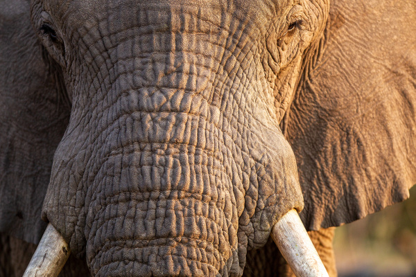 3 Jao Camp (37) - BOTSWANA - François Scheffen Photography