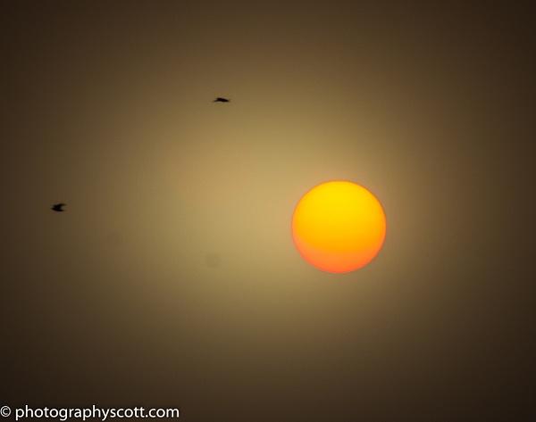 Flight of the Phoenix - Golden Hours - PhotographyScott