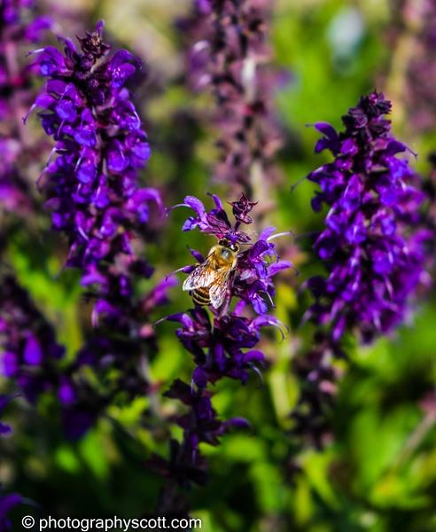 Beautiful Flowers and a Bee Doing Its' Job - Utah - Photography Scott