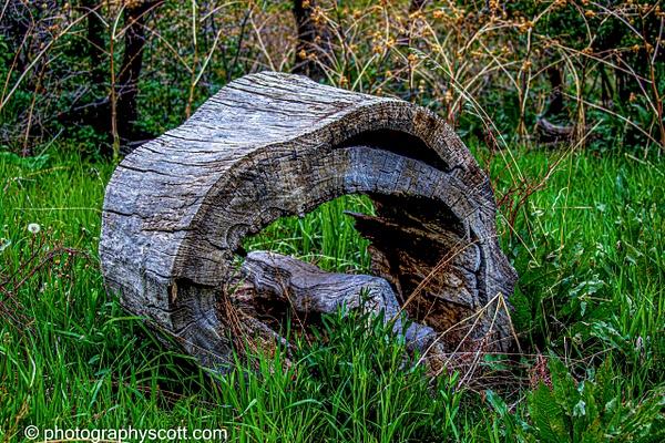 Old Log - Utah - Photography Scott