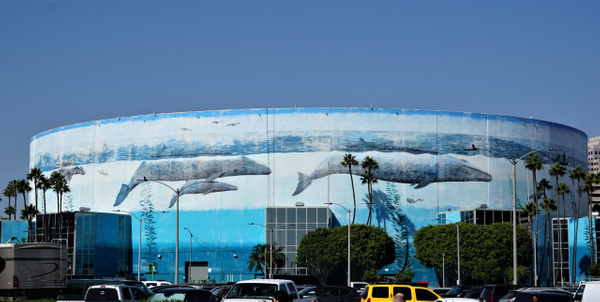 DSC08106 - Long Beach Marathon - Cyril Belarmino Photography