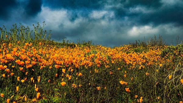 DSC05126 - Home - Cyril Belarmino Photography