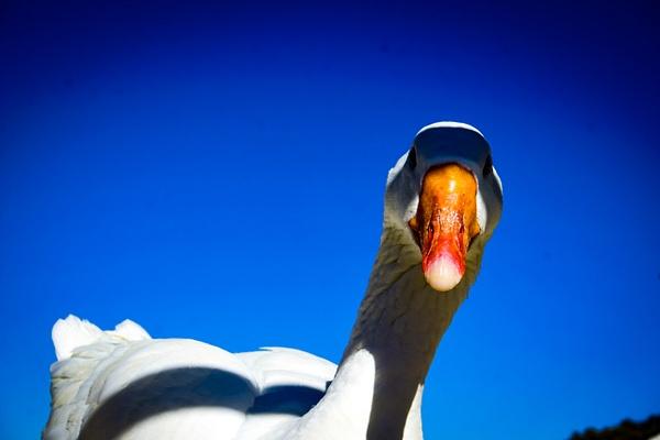 _DSC0727 - Animals - Cyril Belarmino Photography