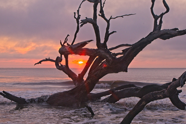 Driftwood View - Home - Phil Mason Photography
