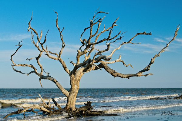 Driftwood Afternoon - Shore Landscapes - Phil Mason Photography
