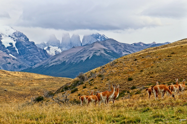 Torres del Paine 4 by PhilMasonPhotography