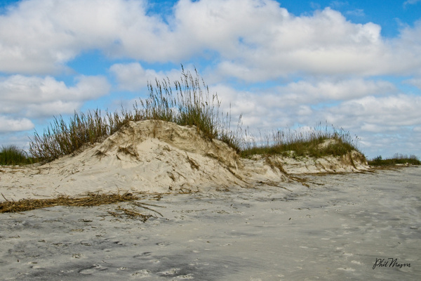 Sea Oats Dune - Shore Landscapes - Phil Mason Photography