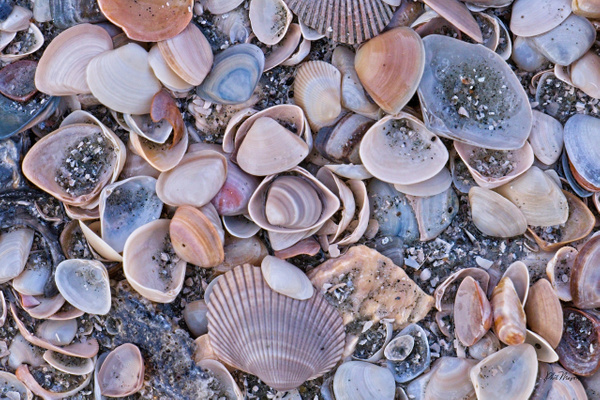 Shell Art - Shore Landscapes - Phil Mason Photography