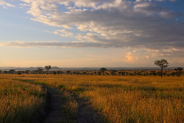 Serengeti Sunset - Home - Phil Mason Photography