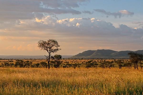 Serengeti Plains 2 - Landscapes - Phil Mason Photography