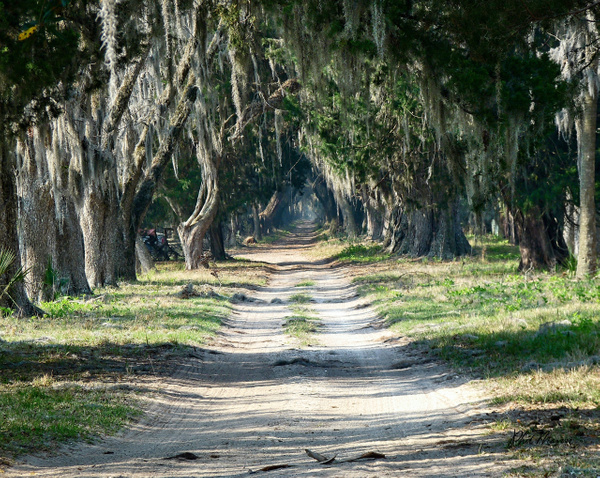 Old Road Ossabaw Island by PhilMasonPhotography