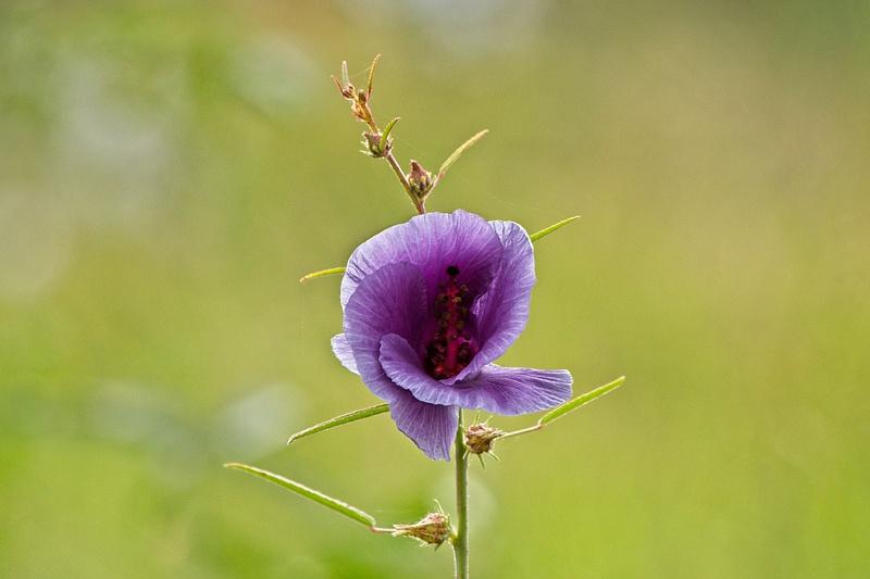 Wildflower Tanzania