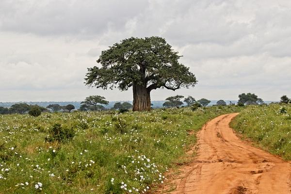 Baobab Road - Landscapes - Phil Mason Photography