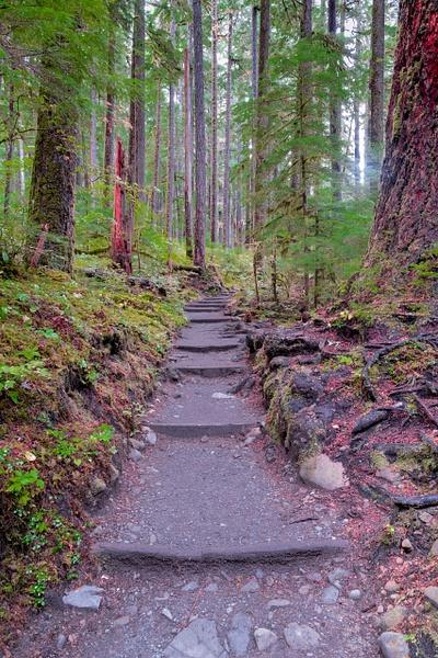 Maremere Falls Path- - Portfolio - Neil Sims Photography