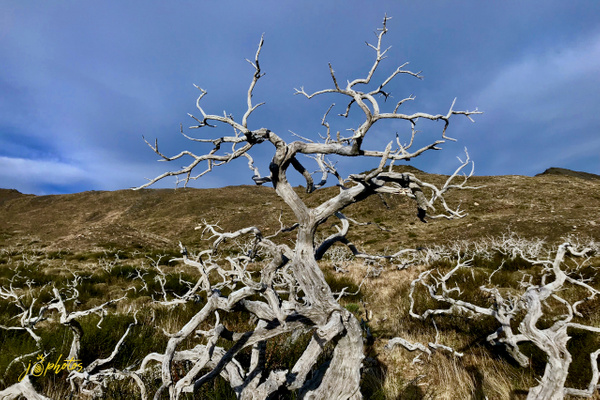web landscapes - 15 - Home - Juan Pina Photography