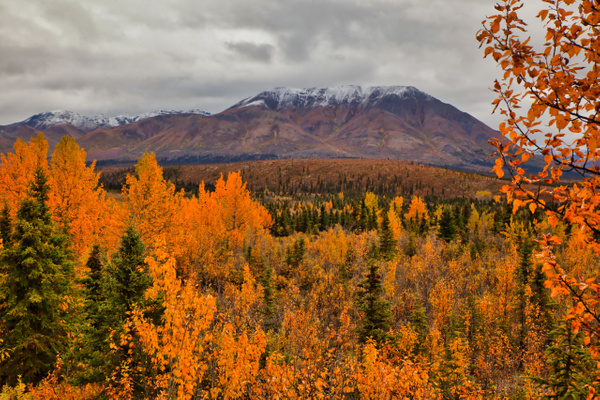 Alaska Fall Colors2 - Order Here - Klevens Photography