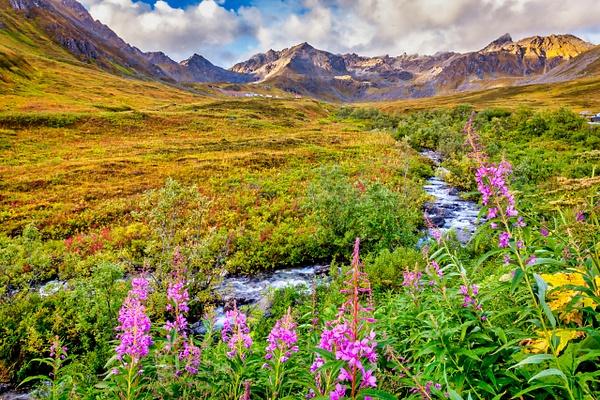 Alaska Hatcher Pass Stream - Naturescapes - Klevens Photography