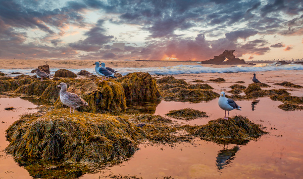 Arch Rock Birds - Order Here - Klevens Photography