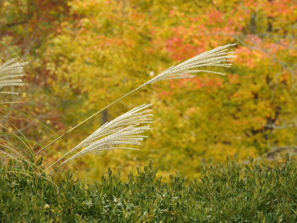 DSCN1011 - Nature - Lane Photography