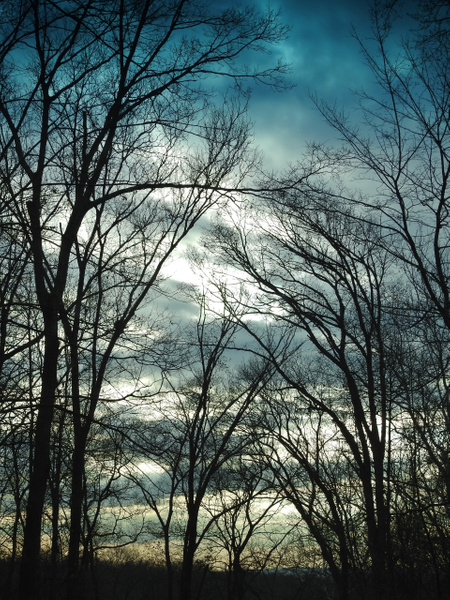 SW 12-12-18 (131) - Nature - Lane Photography