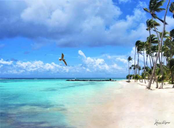 Tortuga Bay DR - Caribbean - Image8