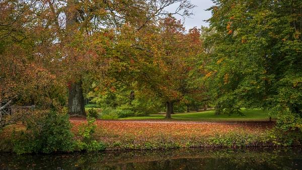 autumn forest - Landscape - Michel Voogd Photography