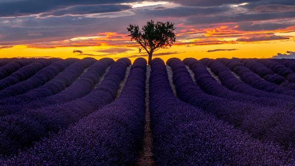 Valensole sunset - Landscape - Michel Voogd Photography