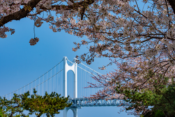 Gwangalli Bridge South Korea - Architecture - Nicola Lubbock Photography