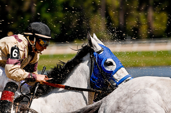 Horse Race 2 by Scott Kelby