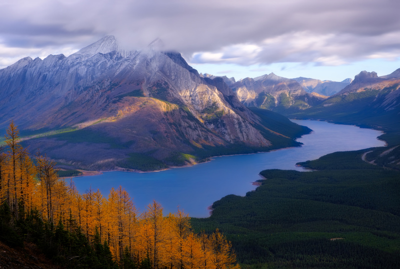 Larch trees with Spray Lakes and Mount Shark 2020